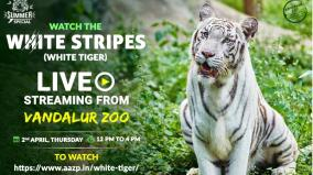 vandalur-zoological-park-can-be-found-online-broadcast-daily-from-12-pm-to-4-pm