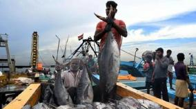 kanyakumari-500-fishermen-return-from-deep-sea