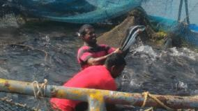 tutucorin-viral-fish-sold