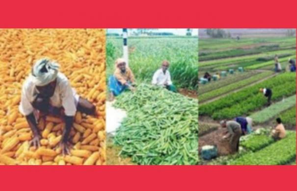 impact-of-curfew-farmers-government-to-procure-produce-high-court-directive