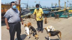 food-to-stray-dogs-bjp-shows