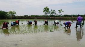 karaikudi-farming-activities-carried-following-socal-distancing