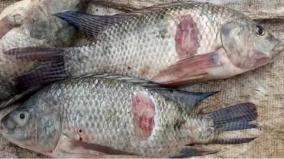 fishermen-given-permssion-to-fish-in-vaigai-dam-from-monday