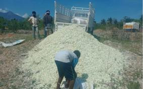 flower-farmers-affected-in-erode-due-to-lockdown