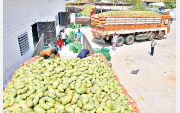 mango-juice-export
