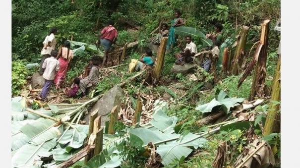 tribal-affected-due-to-forestry