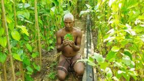 ramanathapuram-beetul-leaves-farming-under-risk