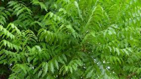 grow-trees-and-protect-yourself-from-disease