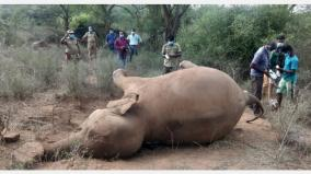 elephant-died-in-urigam