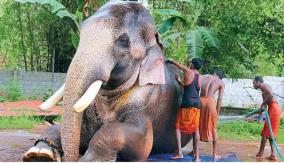 govt-warned-of-another-covid-like-zoonotic-disease-from-elephants