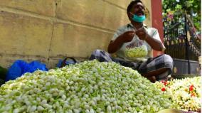 madurai-jasmine-price-down-farmers-under-distress