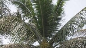 how-to-increase-coconut-cultivation