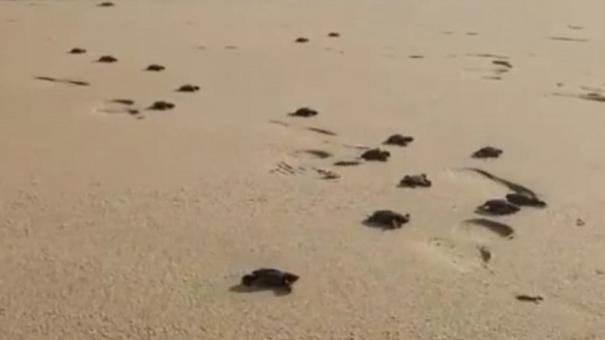 gulf-of-mannar-world-turtle-day