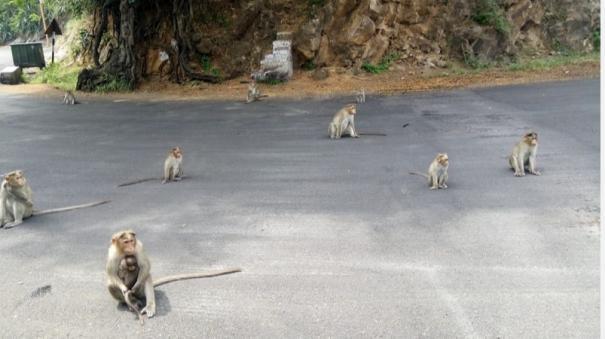 monkeys-fail-to-return-to-natural-life