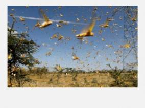 fearing-locust-attack-up-launches-awareness-campaign