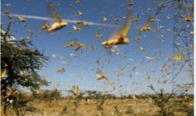 action-should-be-taken-to-disregard-information-that-grasshoppers-will-attack-tamil-nadu-tamil-nadu-muslim-league