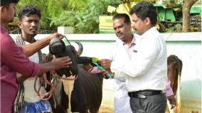 insurance-scheme-for-cattle-in-tn