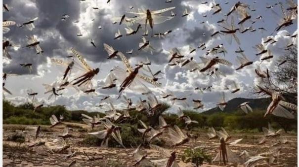 locust-swarm-in-taminadu