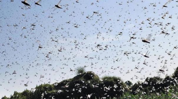 locust-attack