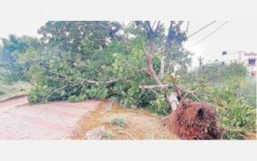 rain-in-madurai