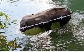 kerala-govt-orders-probe-into-wild-elephant-death-centre-seeks-report
