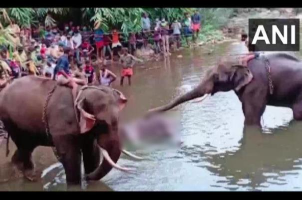 one-person-arrested-in-connection-with-death-of-pregnant-elephant