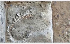 animal-fossil-found-in-keezhadi-excavation