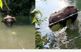 another-elephant-death-in-kerala