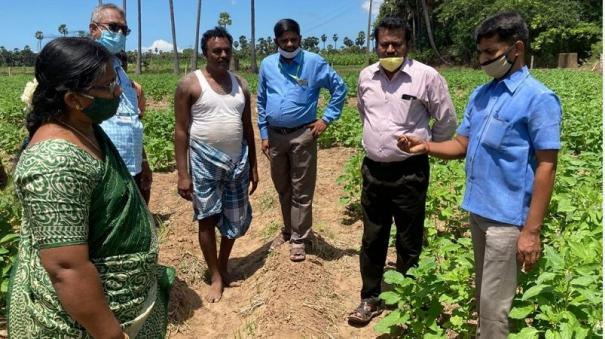 agriculture-scientists-conduct-inspection-in-tutucorin
