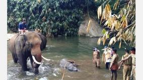kerala-elephant-murder