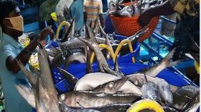 tutucorin-fishermen-happy-about-good-yield-after-3-months