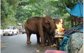 elephant-killing-continues
