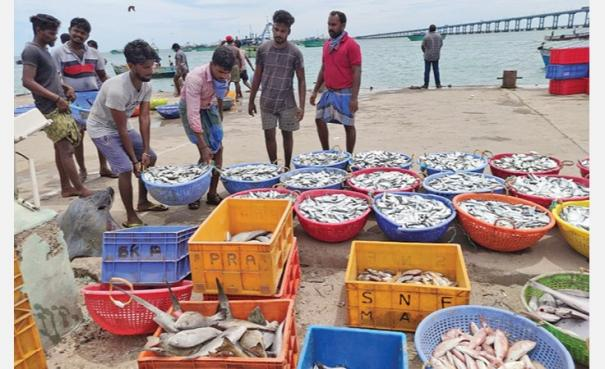 pamban-fishermen-returns-with-lot-of-fishes