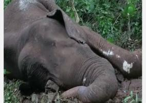 injured-male-elephant-dies-in-kerala-carcass-burnt-after-post-mortem