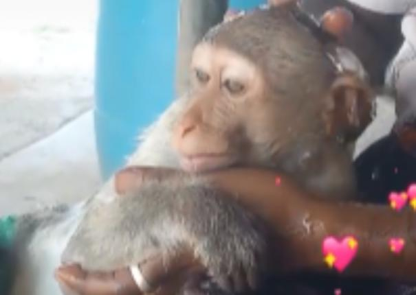 rs-25-000-imposed-for-releasing-video-with-monkey-in-tik-tok