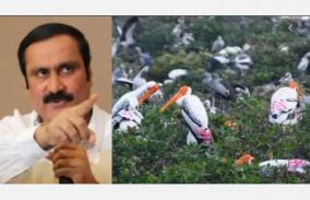 sanction-for-factories-in-vedanthangal-sanctuary-anbumani-ramadas-letter-to-chief-secretary