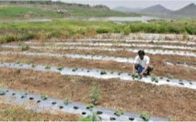 centre-gives-100-subsidy-for-drip-irrigation