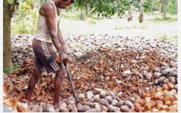 government-declares-minimum-support-price-for-mature-dehusked-coconut