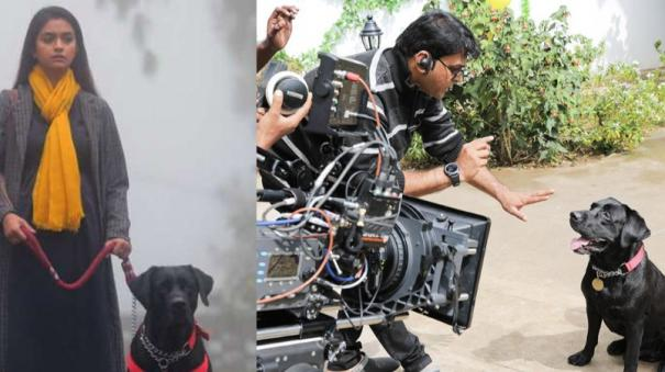 why-penguin-director-cast-his-pet-dog-in-the-film