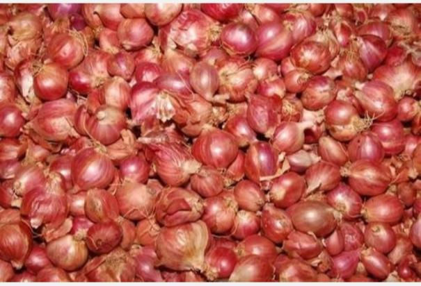 onion-price-will-be-stable
