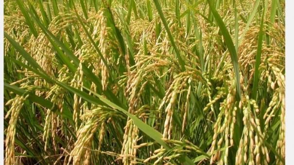 kharif-crops-insurance