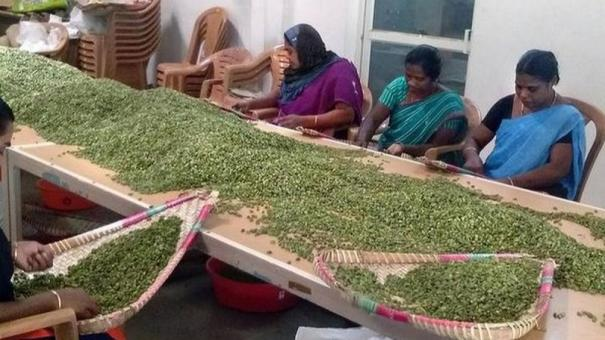 40-cardamom-producers-from-tamilnadu-get-permission-to-participate-in-tomorrow-s-auction