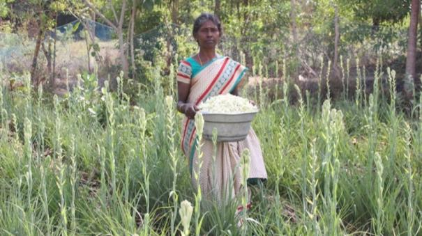 sivagangai-woman-farmer-follows-namazhvar-tradition-of-farming