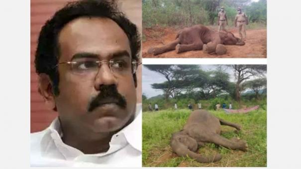 death-of-elephants-is-not-an-easy-pass-why-is-the-minister-silent-thangam-thennarasu-question