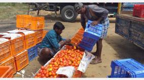 hosur-market-tomato