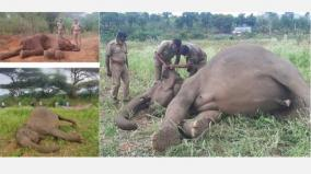 elephant-deaths-spread-on-social-networks-forest-department-denial