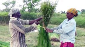farmer-succesful-in-grass-farming