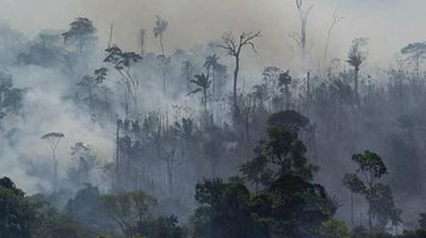 deforestation-of-the-brazilian-amazon-increased-by-a-record-25-percent