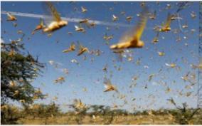 locust-swarms