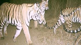 india-s-tiger-census-sets-a-new-guinness-record-for-being-the-world-s-largest-camera-trap-wildlife-survey